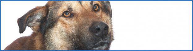 i-dogbites